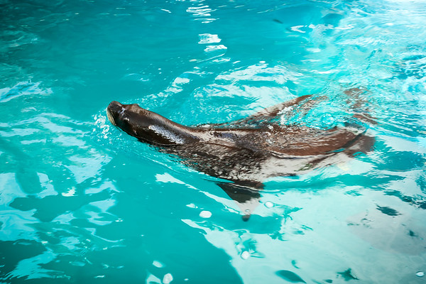 There is a sea lion swimming in a pool near the waiting area
