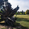AFAIK, this is not one of Guiseppe Penone's sculptures