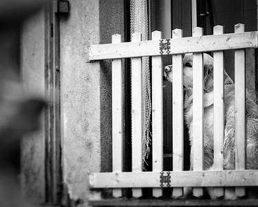 Prisoner of Vernazza