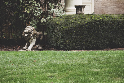 A small, roaring lion statue at the end of a hedge in Pittsburg.