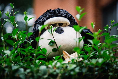Discarded stuffed monkey left on a bush in Pittsburg.