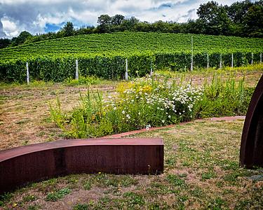 Rex Hill winery in Newberg, Oregon