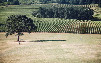 View from Stoller Farms Winery