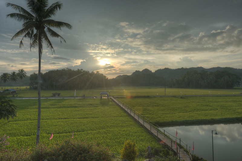 Bohol ricefields at sundown