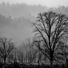 Smoky Mountains 24 1114