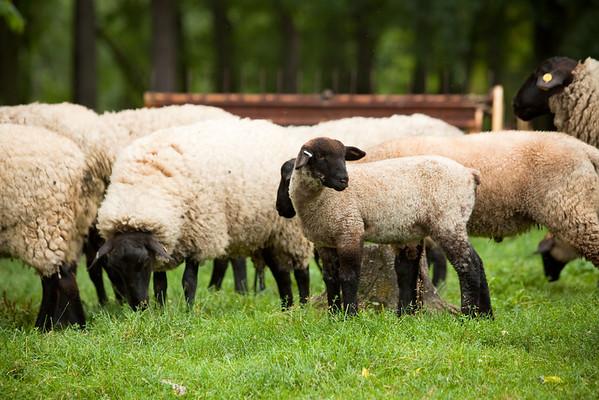 Back on the farm one last time, I take a walk up to the sheep house