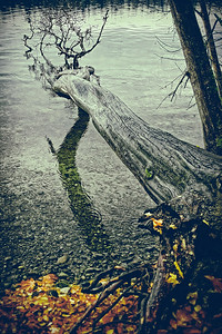 Tree Overboard