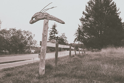 A driftwood sea creature mounted on a fence post down the road from our AirBnB on Lopez Island.