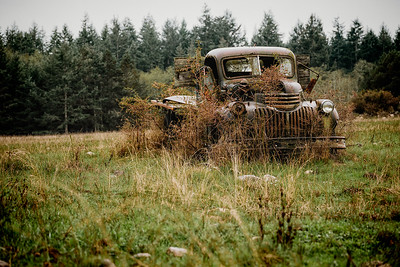 Out to Pasture IV