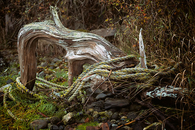 Rope entangled around a large piece of driftwood on Lopez Island.