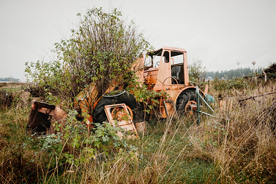 An old, orange-colored loader taken over by plants in a field on Lopez Island.