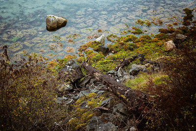 A fallen log points to a rock sticking above the sea water along the Lopez Island shore.