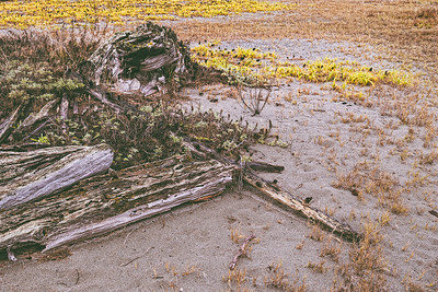 Driftwood, sand and beach plants in Otis Perkins Day Park.