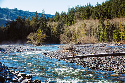Trees in sunlight along the Carbon River.