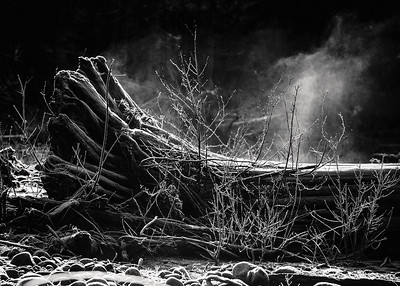 Steam rising from a frost covered tree trunk along the Carbon river near Mt. Rainier.