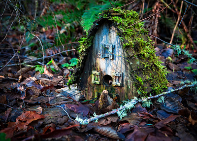 Moss-covered birdhouse on the forest floor.