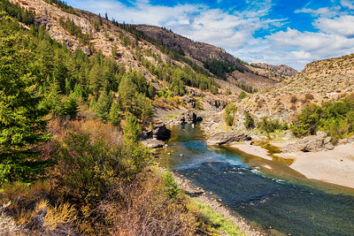 A favorite hangout for bald eagles to hunt salmon is along the Similkameen River.