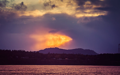 A Phoenix Rises Over Phoenicia