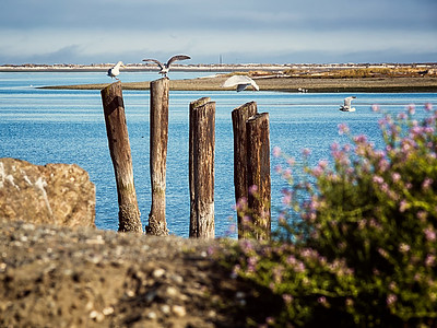 Seagulls land on pilings
