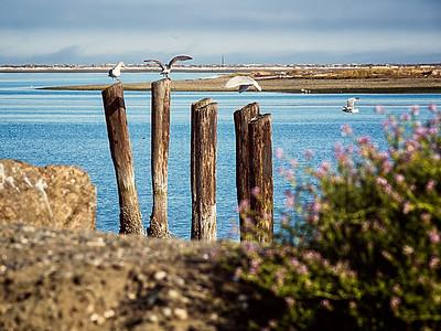 Seagulls land on pilings