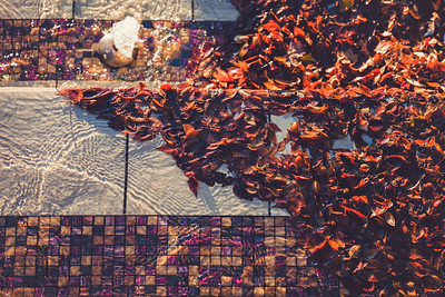 Fall leaves gathered in a water fountain at University St. and 1st Ave, across from Seattle Art Museum.