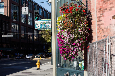 Hanging flowers on 1st Ave in Seattle light up with late afternoon sun.