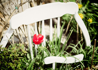 Armchair Red Tulip