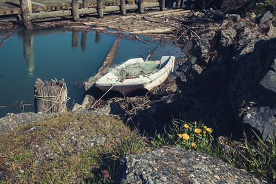 A tired looking boat tied to an old piling with tree logs in the water and a bunch of dandelions in the foreground.