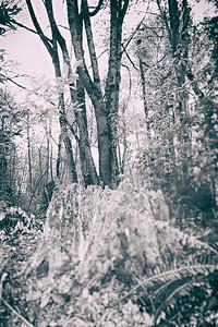 Tree Stum Pot