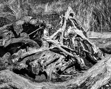 Driftwood Triangle