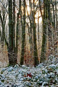 A Little Sun and Snow