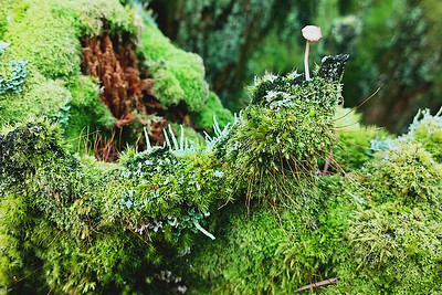 Mossy Throne