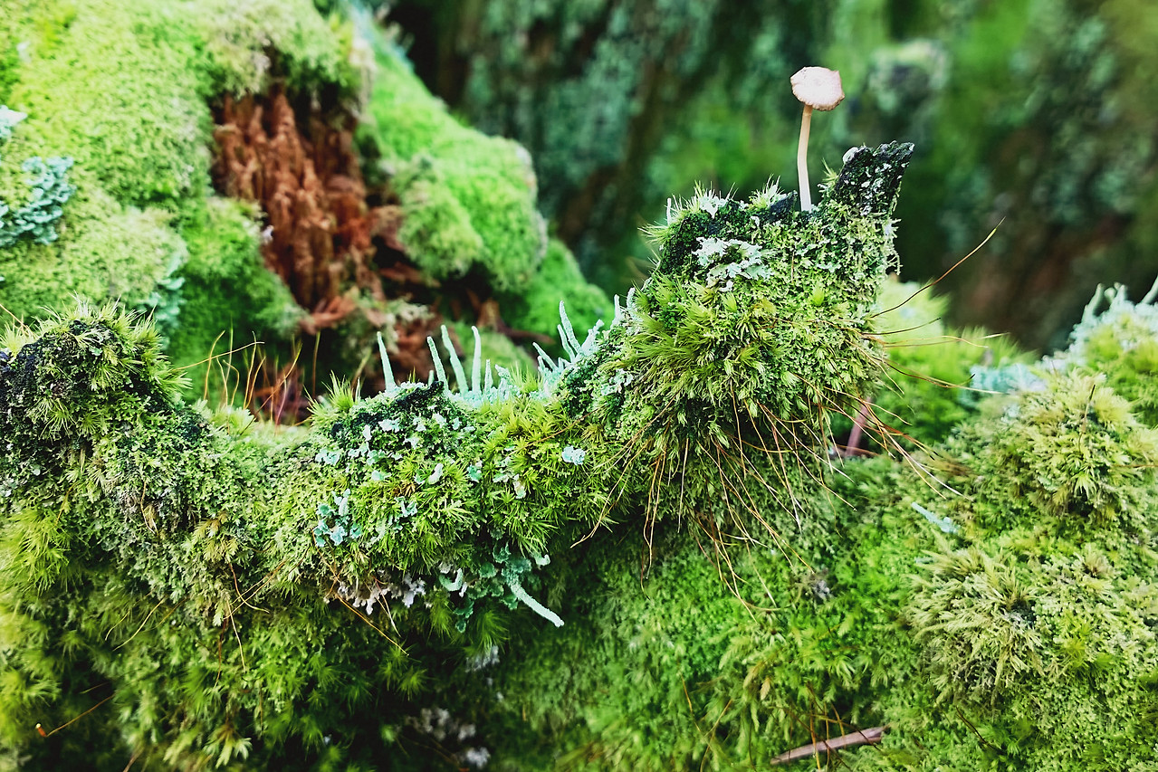 Mossy Throne