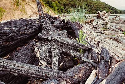 Dragon burned in fire