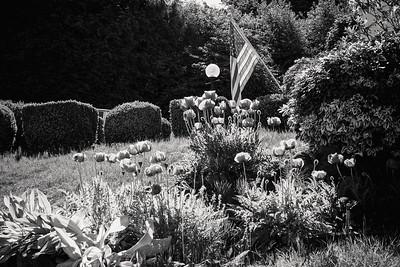 Poppies & Stars & Stripes