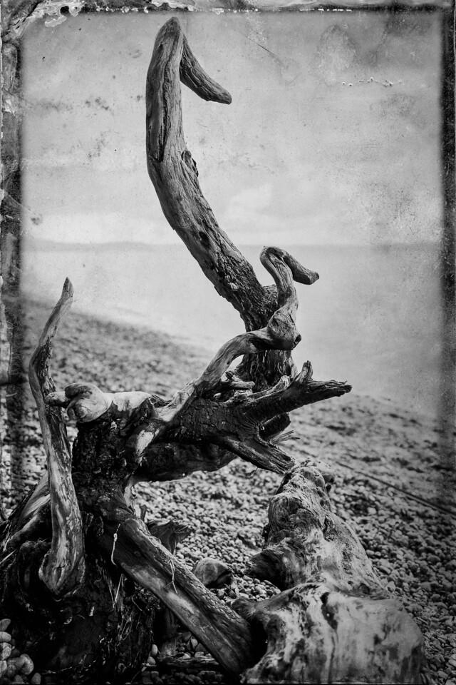 Driftwood Swans II