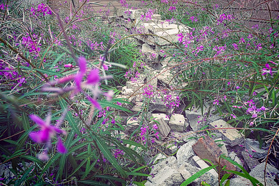 A nearby church with forgotten stone bricks overtaken by purple flowered plants.