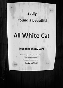 ALL WHITE CAT