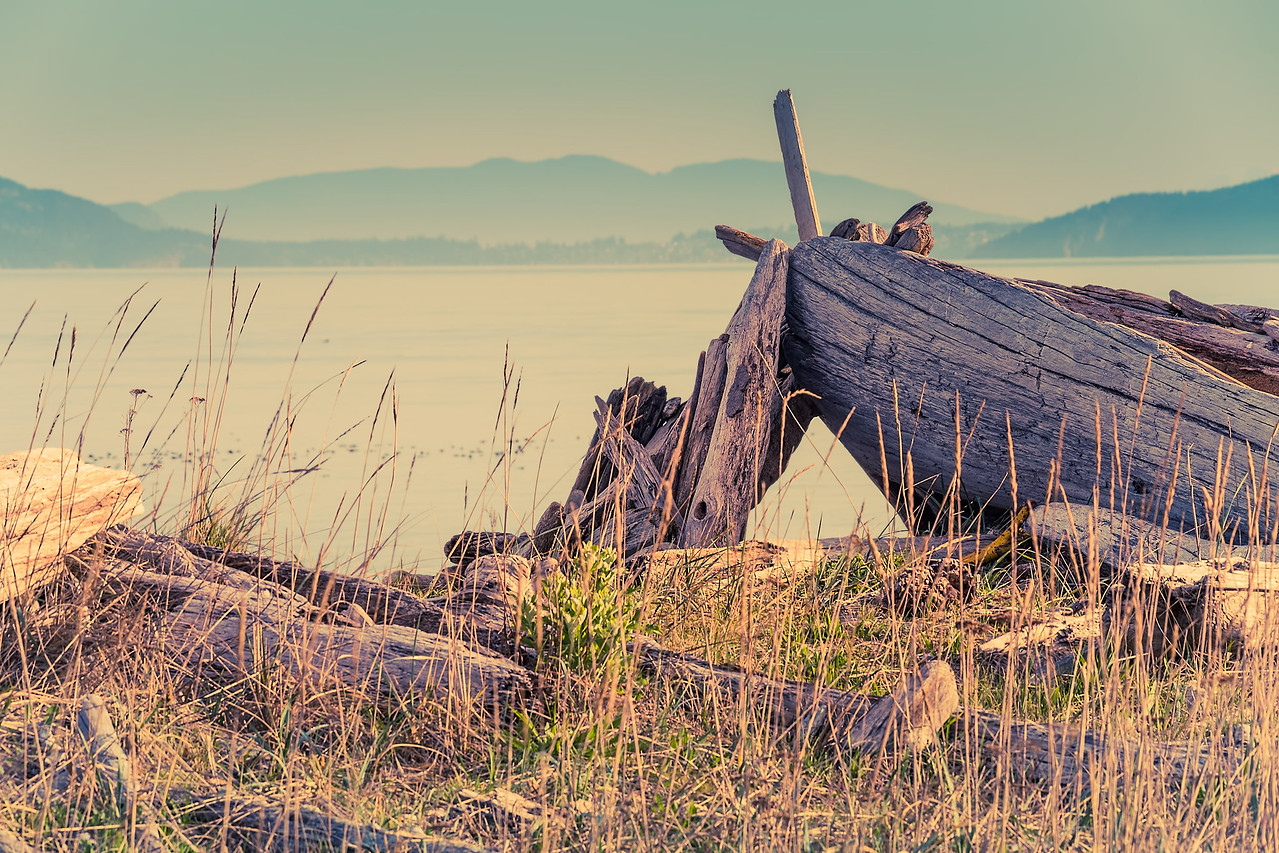 Driftwood Pile - Joesph Whidbey State Park