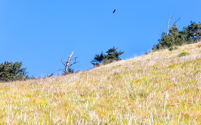 Soaring Above the Pacific NW Trail