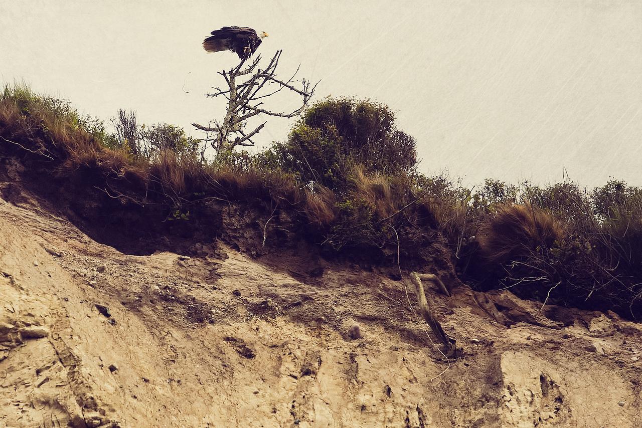 Big Bird on a Scraggly Tree