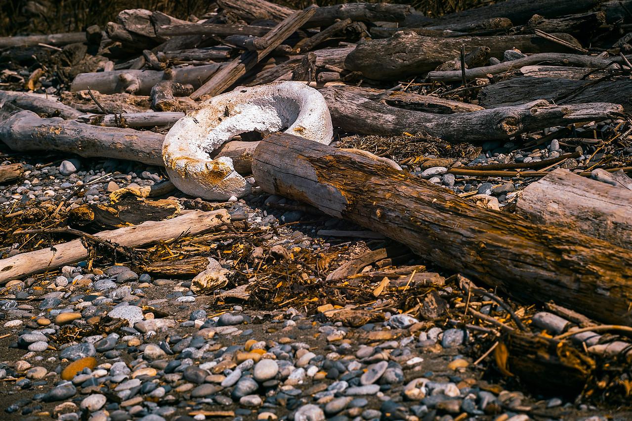 Ring Around the Driftwood