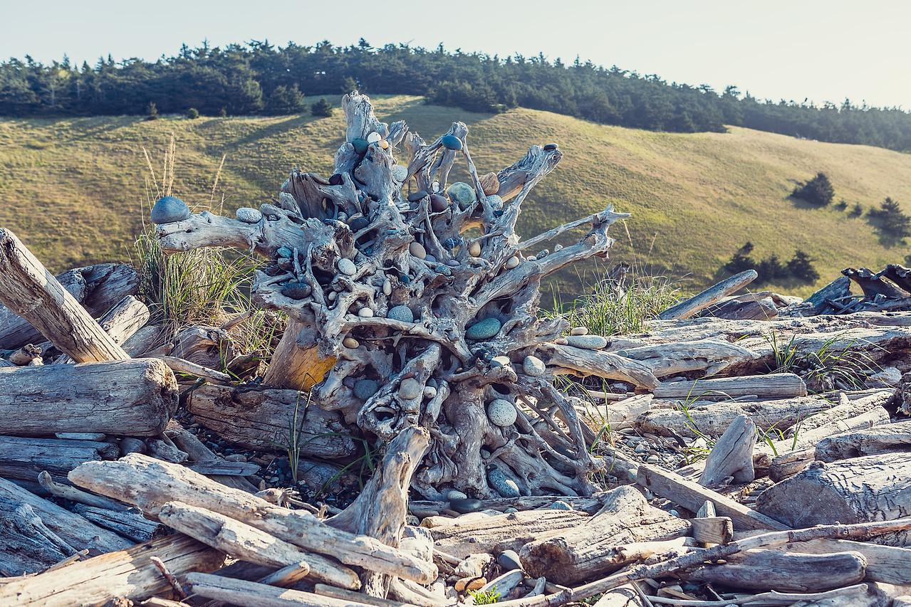 Rocks Around the Roots