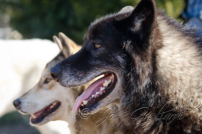 20120107-Wolves-023-79