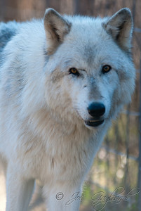 20120107-Wolves-024-3