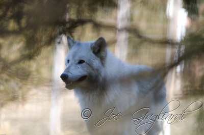 20120107-Wolves-023-112