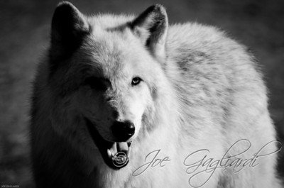 20120107-Wolves-023-103