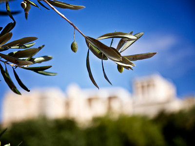 Olives Of The Acropolis (Athens, Greece)