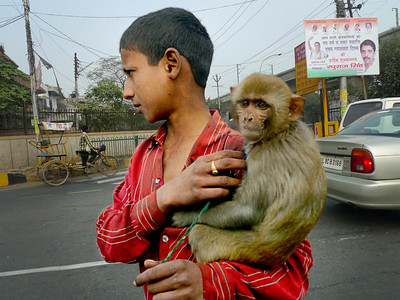 If you beg with a monkey, you can afford a gold ring (Noida, India)