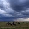 Rainstorm rolls across the Serengeti, as the wildebeast migration keeps moving